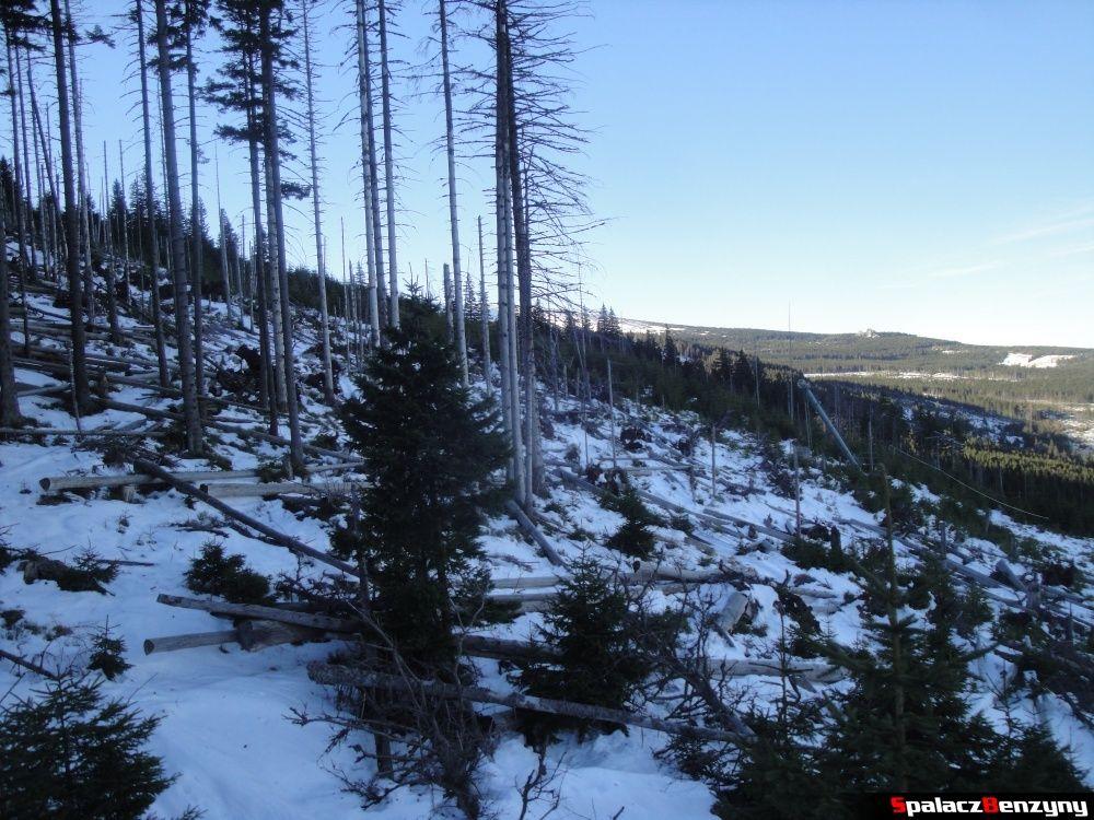 Martwe drzewa na Kopie w Karpaczu